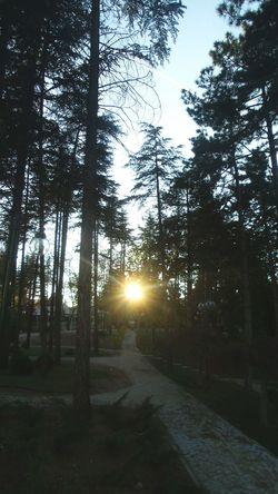 Gün geceye kavuşurken. Sunset Trees Sun Anadoluuniversitesi çamağacı Agaclar Akşam Güneşi