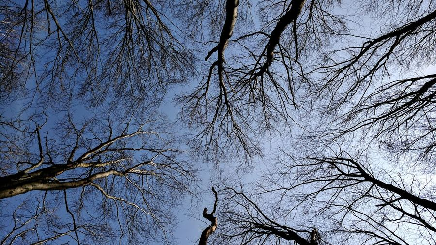 Tree Sky Low Angle View Nature No People Branch Growth Beauty In Nature Bare Tree Outdoors Tranquility Day Close-up
