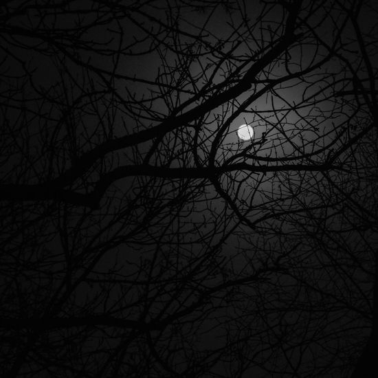 Dark night of the soul Atmosphere Autumn Bare Tree Black And White Pattern Pieces Showcase: January Full Moon Low Key Moody Mystery Nature Outdoors Pattern, Texture, Shape And Form Shadows And Backlighting Silhouette Tangled Tranquility Tree Darkness And Light Dark Night Of The Soul Dark On Dark Light And Shadow Night Lights Fine Art Photography Nordic Light