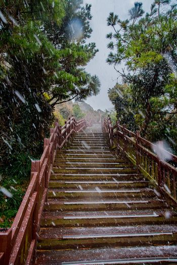 Steps Staircase Steps And Staircases Tree Railing The Way Forward No People Outdoors Nature Day Beauty In Nature Sky