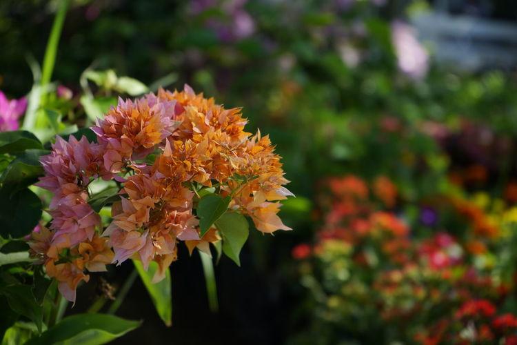 Close-up of orange flowering plant in park