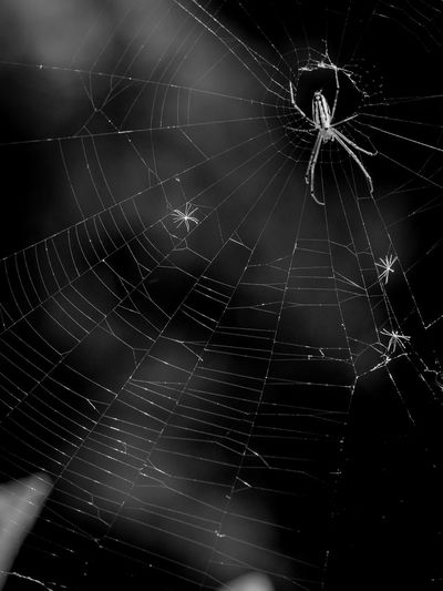 主役はクモの巣 Cobweb Olympus Olympus Om-d E-m10 EyeEm Monochrome Blackandwhite Backgrounds Web Spider Web Spider Close-up