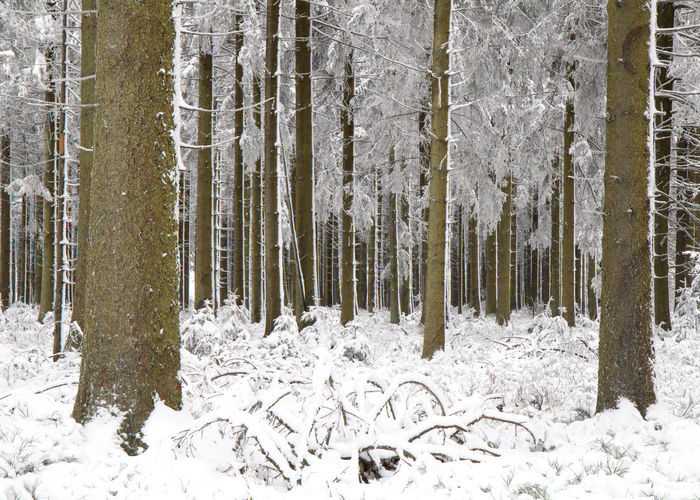Belgium Landscape_Collection Nature Nature Photography Tree Winter Beauty In Nature Forest Hautes Fagnes High Fens Hoge Venen Landscape Landscape_photography Landscapes Lonely Tree Snow Snowing White