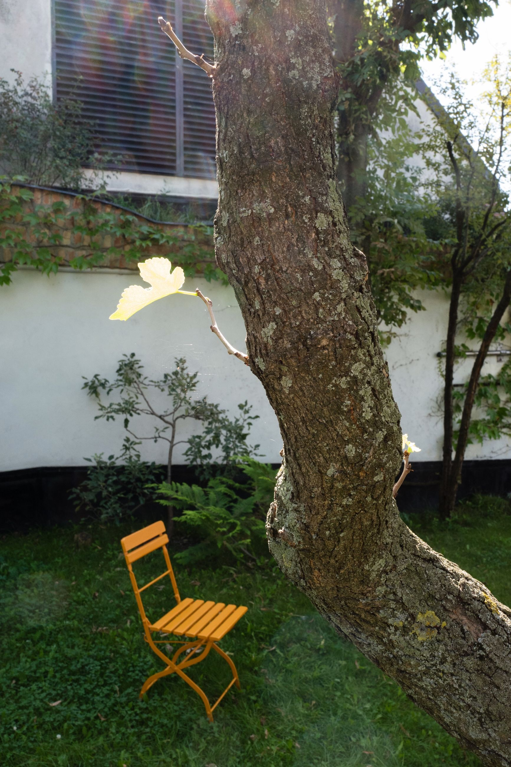 plant, seat, tree, tree trunk, chair, trunk, nature, grass, empty, no people, absence, day, front or back yard, outdoors, growth, building exterior, built structure, architecture, lawn, yellow