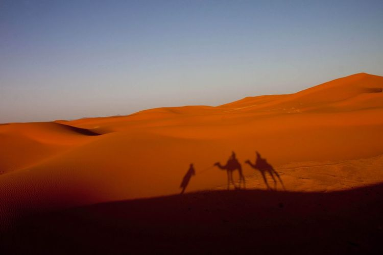 Desert Moroccan Desert Morocco Camels Camel Trek Camel Riding Shadows Shadows On Sand Two Riders Riding In The Desert Magic Orange Sand Sand Dunes Dunes Sand