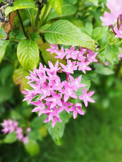 Flower Leaf Plant Purple Nature Pink Color Beauty In Nature Outdoors No People Green Color Growth Close-up Fragility Freshness Day Flower Head