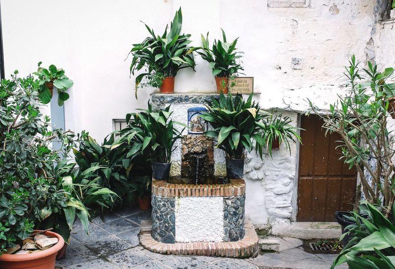 Secret water fountain Open Edit EyeEm Best Shots - My World Streetphotography Green Green Green!  Plants And Flowers SPAIN Water Fountain Secret Garden Secret Places FujiX100T