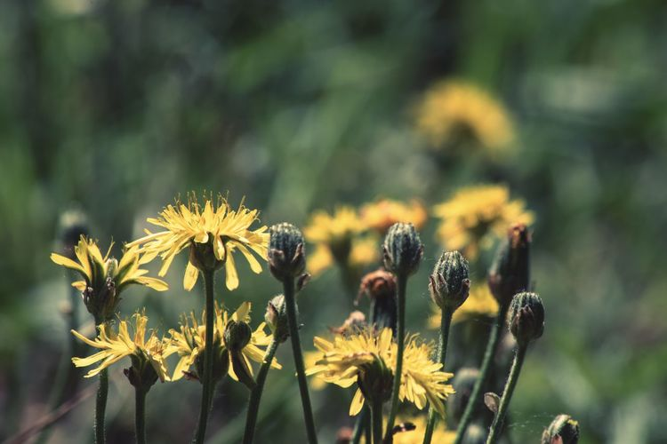 Nature Flower Head Flower Plant Part Yellow Petal Flowering Plant In Bloom Plant Life Blooming Botany Wildflower Blossom