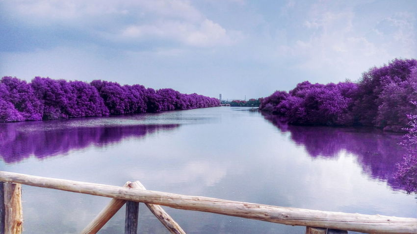 Purples 💜 Panorama Travel Photography Photo Photooftheday Photoshoot Smartphonephotography Natural Nature Purple Showcase July Clouds Relaxing Purples Tree Pantai Indah Kapuk Mangrove Jakarta INDONESIA