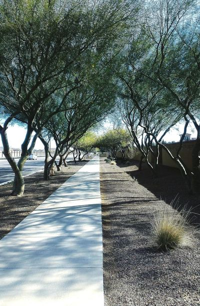 Somewhere in Gilbert, Arizona Arizona Nature Outdoors Nature Shadow Sunlight