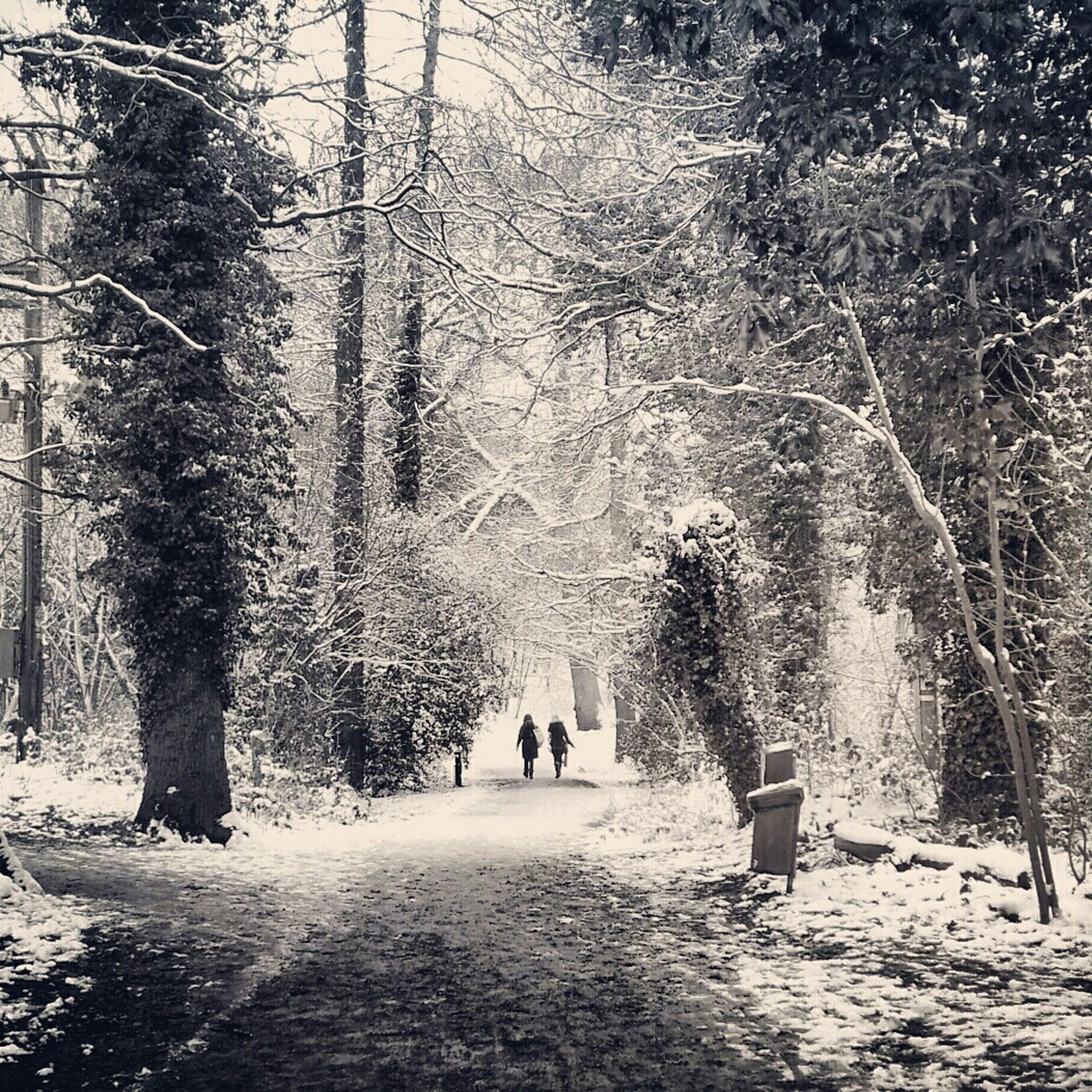 tree, walking, forest, leisure activity, tree trunk, lifestyles, men, the way forward, winter, nature, woodland, season, full length, cold temperature, snow, rear view, tranquility, growth, person