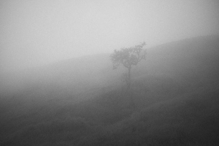 Tree black and white Beauty In Nature Soft Symbol Travel Blackandwhite Art Film Style Film Grain Fog Forest Misty Mornings EyeEm BlackandWhite EyeEm Nature Lover
