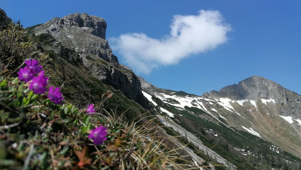Coulors Of Nature Snow Rocks Flower Mountain Sky Mountain Range Cloud - Sky