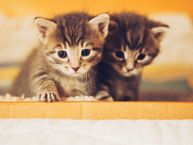 Our cat recently had three sweet kitten Kitten Sweet Animal Cats Cute Cute Pets Hello World Happy Moments My Cat Life Real Life Animals Little Pet Two Is Better Than One