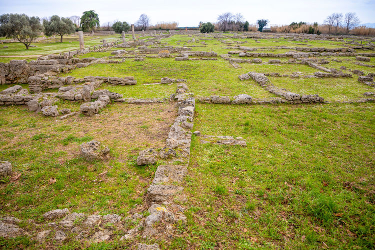 Italy Paestum Plant Grass Field Green Color Land Landscape Day Environment Tranquil Scene Tranquility Nature History No People Growth Ancient Scenics - Nature Tree Beauty In Nature The Past Outdoors Ancient Civilization Archaeology Ruined
