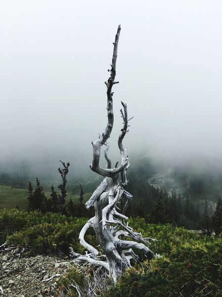 Nature Hiking Tranquility Tranquil Scene Wood - Material Scenics Tree Dead Plant Log Nature Remote Branch Beauty In Nature Driftwood Tree Trunk Non-urban Scene Solitude Root Clear Sky Tourism Travel Destinations Growth