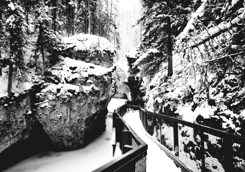 Tree No People Day Nature Bridge - Man Made Structure Outdoors Beauty In Nature Blackandwhite Winter Snow ❄ Snowing ❄ Alberta, Canada Banff National Park  Travel Destinations Scenics Frozen Nature Forest Calm Beauty White Background Tree Travel Tourism Snow Canada Snow Sports Finding New Frontiers