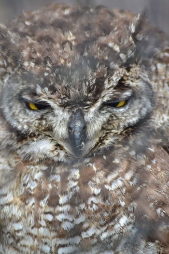 Owls Are Cute Owl Eyes Owl Owllife Eaglephotography Bird Photography Im Looking At You