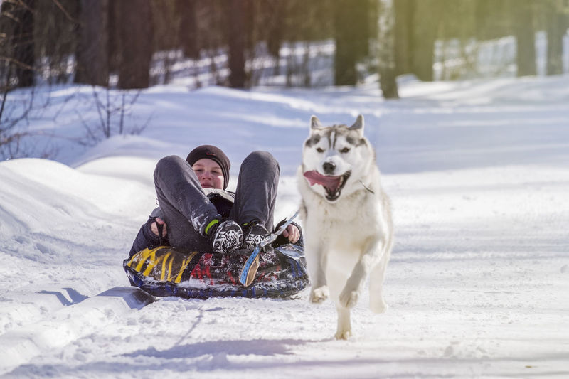 Boy sitting on sled pulled by dog on snow covered field