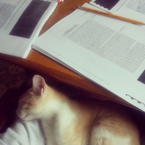 Donna multitasking ! Io studio sociologia e lui si fa coccolare e dorme ! Lovepuppy Studyhard