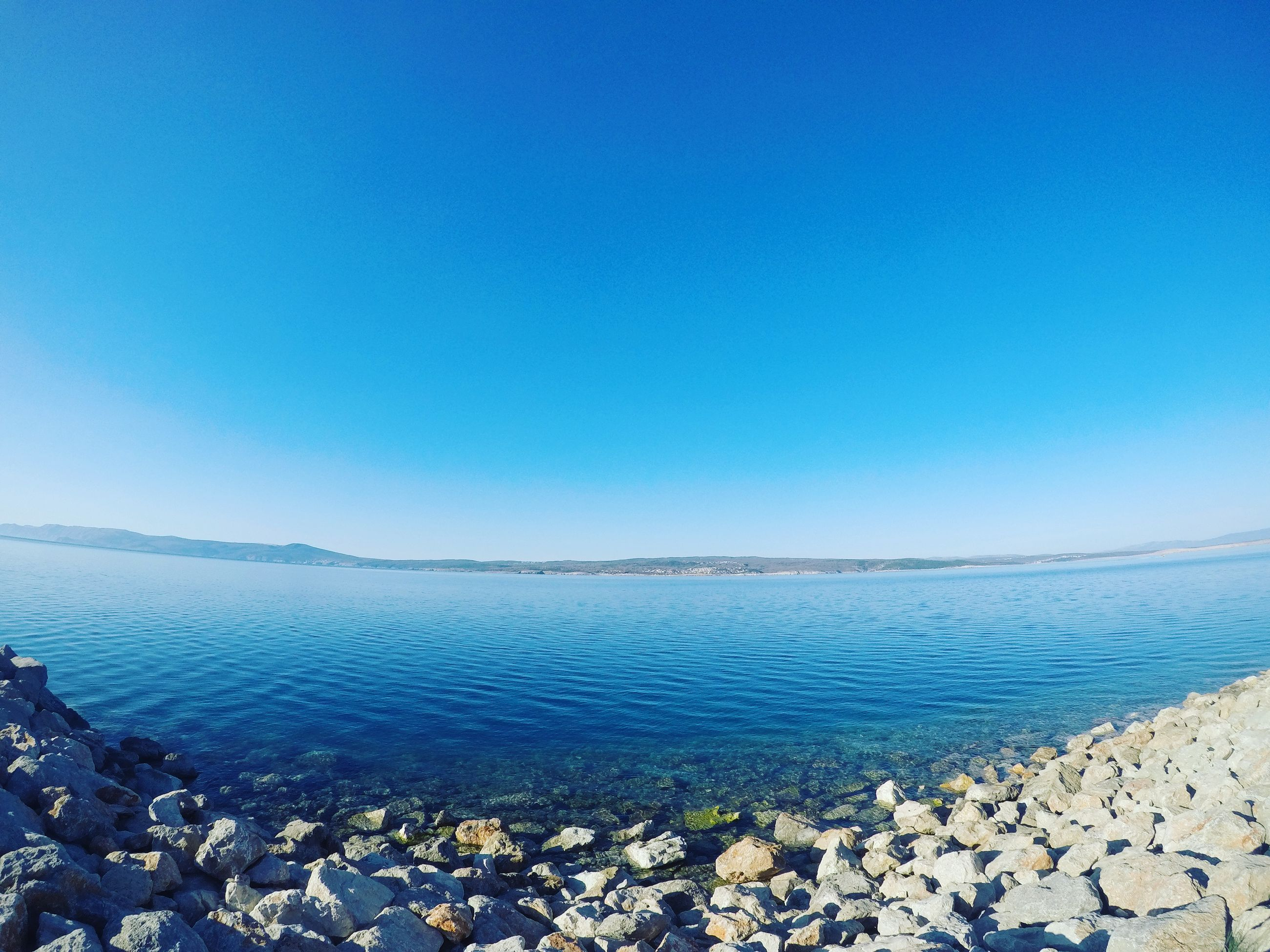 blue, clear sky, water, tranquility, nature, agriculture, farm, sky, growth, beauty in nature, scenics, rural scene, tranquil scene, plant, no people, day, outdoors, close-up, freshness