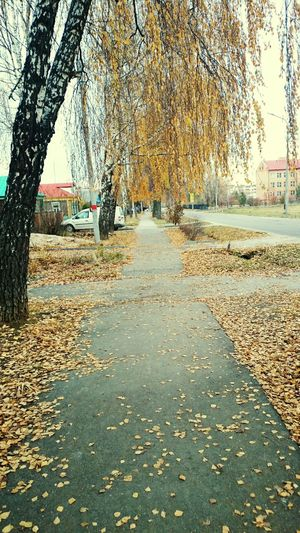 Eeyem Photography Hello World Check This Out Taking Photos Auntumn Golden Moment Streetphotography Street натуральный Outdoor Old Photo старый фото привет мир Осень 🍁🍂 улица