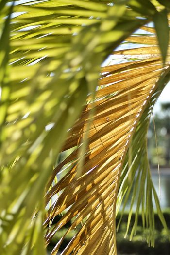 Close-up of palm leaves growing outdoors
