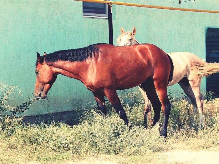 Оранжевая лошадка вмиреживотных Командировка актау
