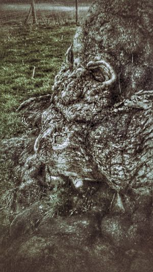 https://youtu.be/fzAmkMTuTFI Spirit of the woods..... Spirit Of The Wood Spirit What Do You See? Old Man Of The Forest Man Of The Forest Tree Tree Trunk Tree Spirits Old Man Spirit Of The Forest  For Friends That Connect  Tadda Community Looks Like TreePorn Field Close-up This Is Queer