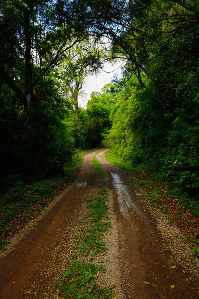 Beauty In Nature Day Forest Green Color Growth Landscape Nature No People Outdoors Plant Road Scenics Sky The Way Forward Tranquil Scene Tranquility Tree