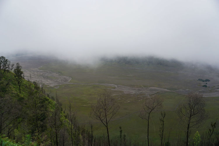 Mount Bromo and white fog Fog Plant Tree Beauty In Nature Environment No People Tranquility Scenics - Nature Nature Landscape Land Tranquil Scene Day Sky Non-urban Scene Green Color Outdoors Forest Growth Hazy  Smog Bromo Bromo-tengger-semeru National Park Bromo Mountain Bromo Mountain Indonesia