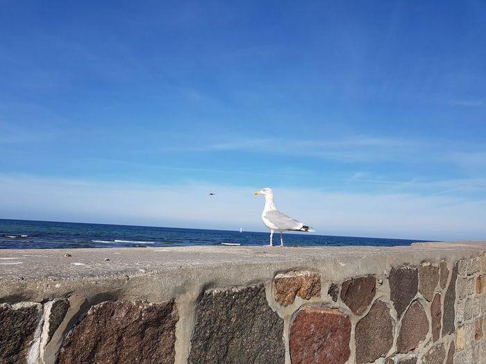 seagull looks