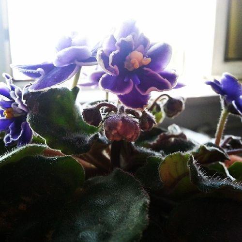 Beauty Flower Purple In spring