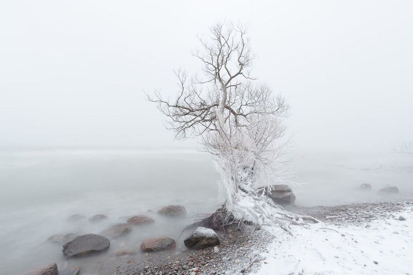 tree on the lake shore during winter storm Winter Storm Snow Water Tree Cold Temperature Copy Space Close-up Sky Horizon Over Water Wave Snow Covered Surf Crashing Shore Rocky Coastline Power In Nature Coast Splashing Foggy