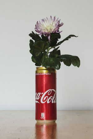 Flower Red Vase White Background Close-up Mason Jar Petal In Bloom Dahlia Plant Life Single Rose Cosmos Flower