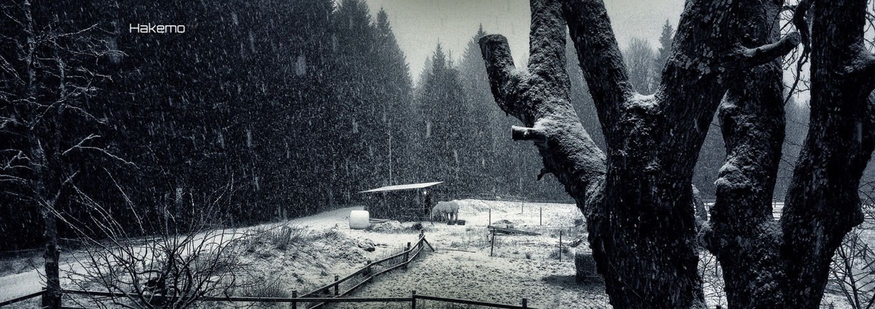 Blackandwhite Landscape Snow Eye4photography