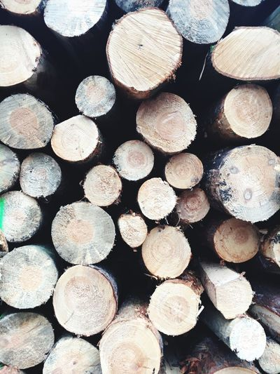 Forest Timber Log Stack Firewood Woodpile Forestry Industry Heap Abundance Large Group Of Objects Wood - Material Shape Lumber Industry Wood Deforestation Environmental Issues Fuel And Power Generation Backgrounds Full Frame Day Textured