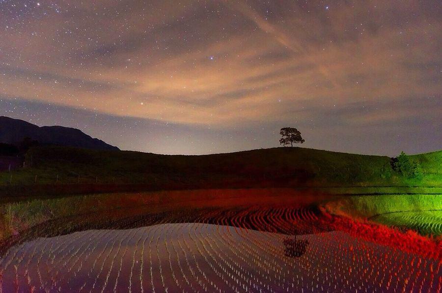 熊本県 Nature Japan HDR HDR Collection Hdr Edit Landscape_lovers Beauty In Nature EyeEm Best Shots EyeEm Nature Lover Tree Art Hdr_gallery Night Photography