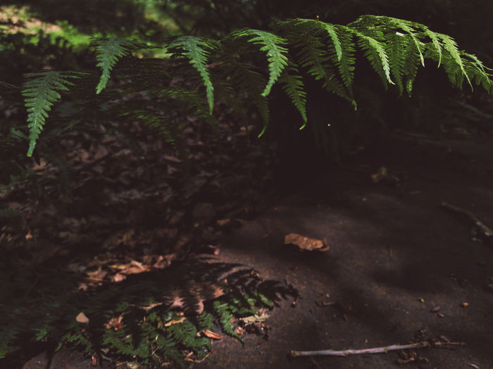 I'll hide you in my shadow. Nature Forest Leaf Plant Woods WoodLand