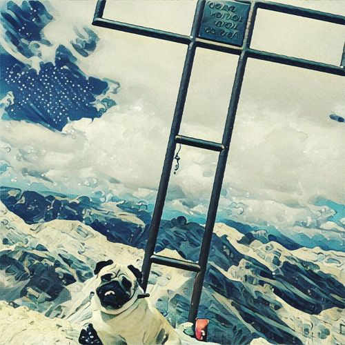 Up to the sky Sole...☀ Colour Of Life Mountains And Sky Gipfelstürmer Sunnyday☀️ Summer Memories 🌄 Summer Alto Adige Animals Animals In The Wild Italy Südtirol Italy❤️ Berg Kreuz  Hunde Liebe ♡ Hund Mops Mops:) Mopsstyle Carlino Pug Pug Pug Life  Pug Love