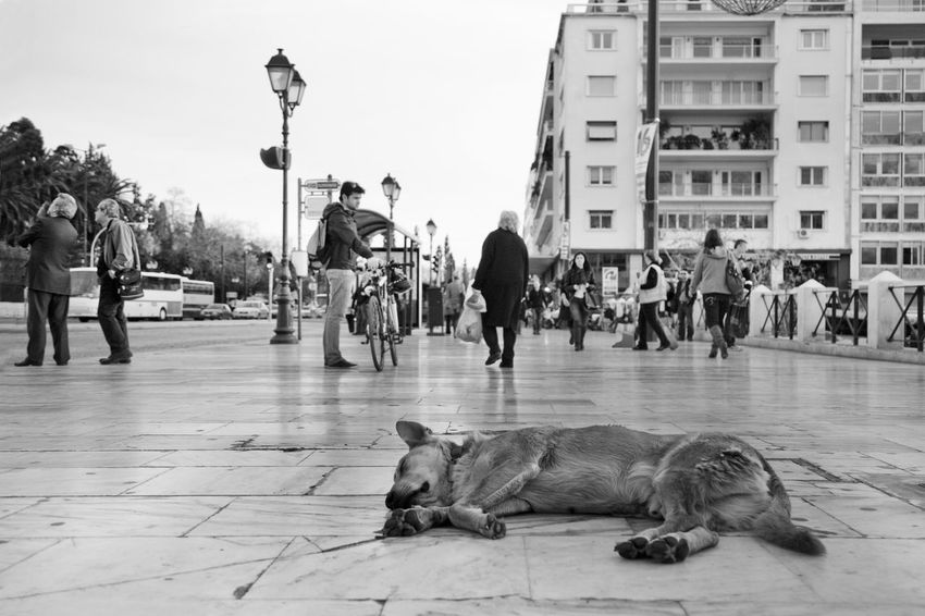 Bicycle City Life Dog Greece Lifestyles Men Real People Road Stray Stray Dog Street Syntagma Walking Women