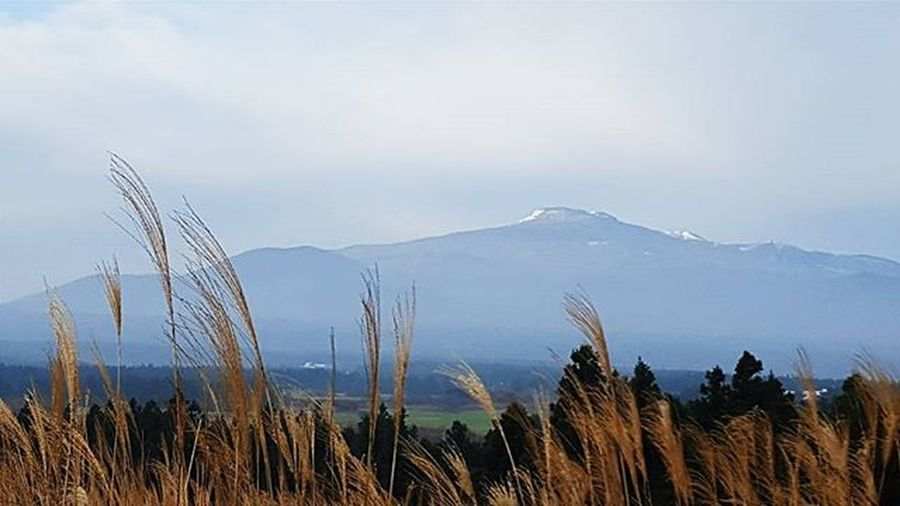 Indulge in solitude, find peace in silence... Introverting Prosolitude Naturelovers Adzventure2016 Relaxing Moments Mountain Silver Grass