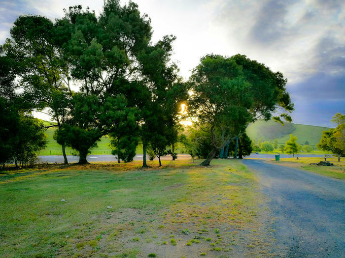 Sunset at a lay by South of Auckland City Tree Nature Growth Green Color No People Scenics Outdoors Beauty In Nature Sky Day The Week On EyeEem Beauty In Nature Sunlight Meremere South Of Auckland In New Zealand Miles Away The City Light