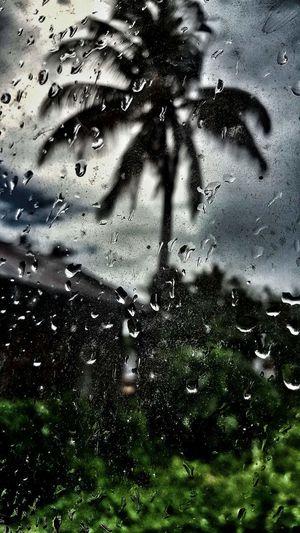 Rainy Days Windowraindrops