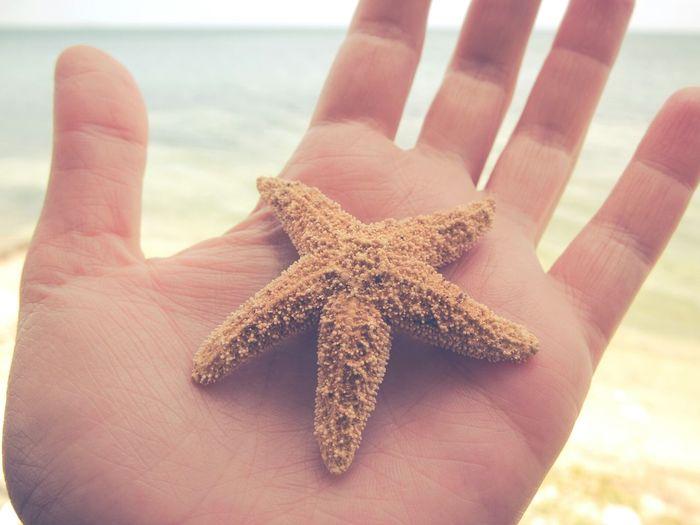 Beach Sea Starfish  Hand Pastel Cuba
