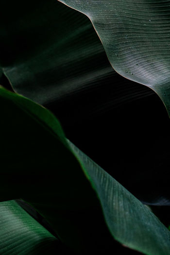 Close-up of green leaves at night