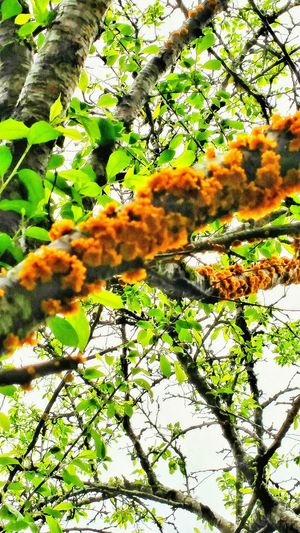 Lichens On A Tree Limb Bright Orange Orange Outdoor Photography Nature Photography Macro Micro Photography Macro Beauty Macro Nature Trees Of Eyeem Fungus 🍄 Fungus Funji