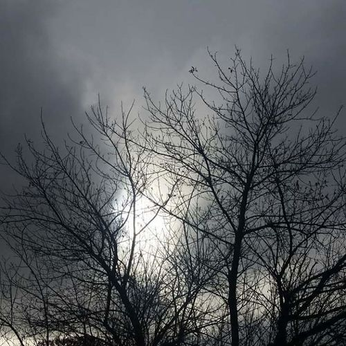 Fall in love with your darkness Bird Tree Bird Of Prey Bare Tree Branch Vulture Tree Area Forest Silhouette Sky Foggy