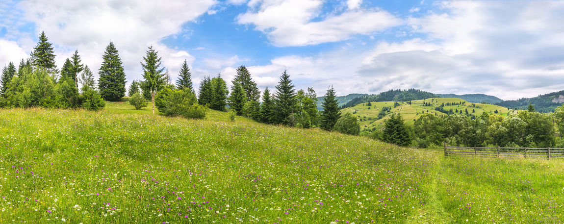 Beautiful spring panorama with a meadow full of colorful field flowers, a footpath, and a line of green trees, near Sadova town, Romania. Cloud - Sky Field Forest Grass Green Color Landscape Mountain Nature No People Outdoors Sky Spring Summer Sunny Day Tranquil Scene Tranquility