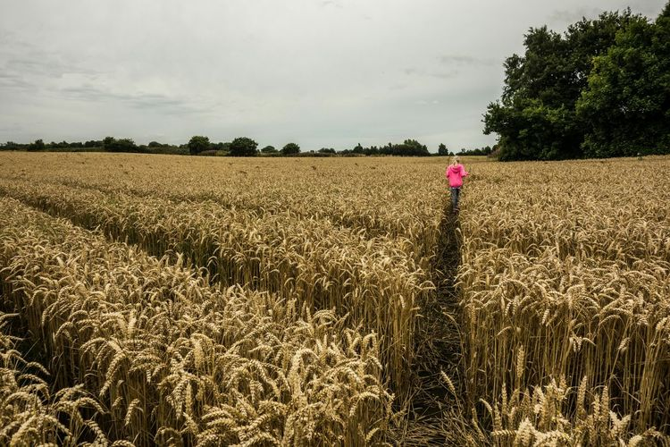 Crop footpath Hindley Wigan Fields Summer Walking